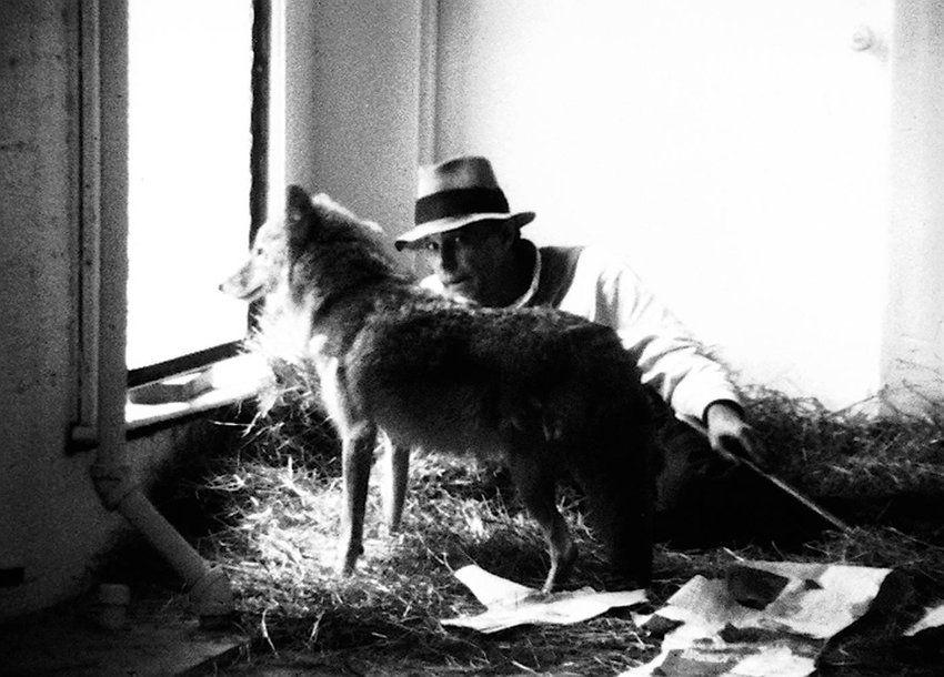 Joseph Beuys I Like America and America Likes Me Coyote
